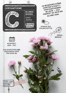 Pflegetipps für deine Chrysanthemen