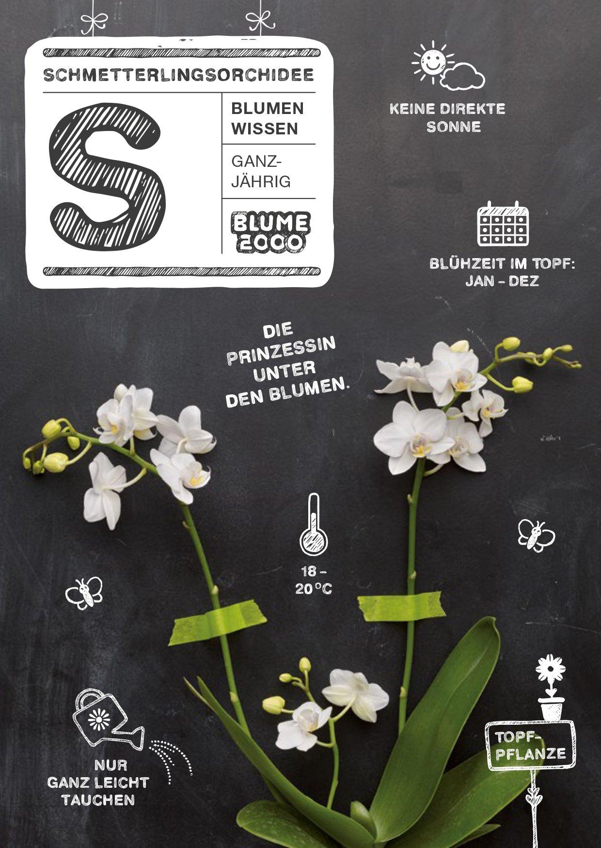 Volle Blütenpracht für deine Orchideen